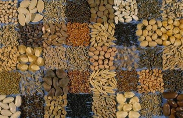 Где купить экологические семена в зарубежных интернет-магазинах?