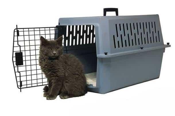 Запрет на перевозку животных