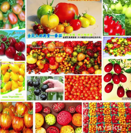 Результат посева семян, купленных на Aliexpress