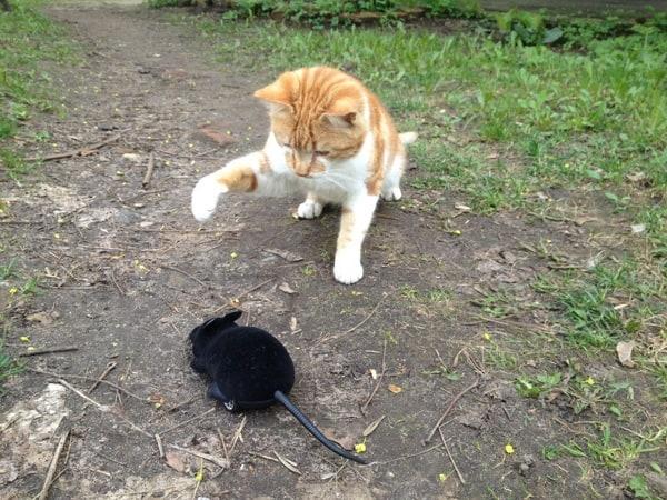 Радиоуправляемая мышь для кошек