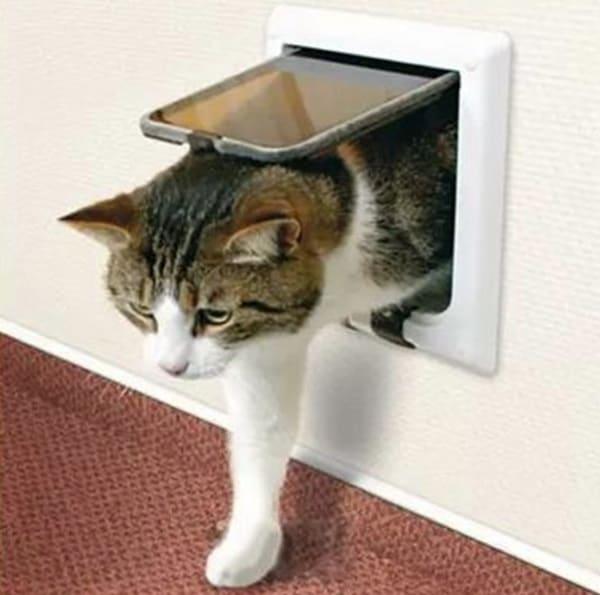 Откидная дверка для кошек